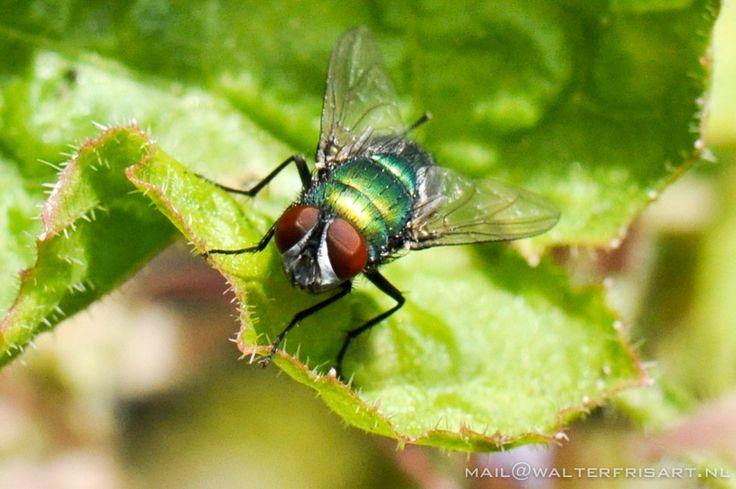 Vlieg - Fly   ©gk24