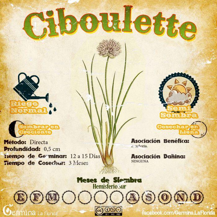 Les traemos este útil calendario de las Siembras del mes de Septiembre, además de fichas con información específica de cada planta que p...