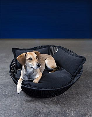 SIRO Saleen - orthopaedic dog bed, modern dog bed, orthopaedic dog bed, pet world, dog pillows and beds, pet supplies