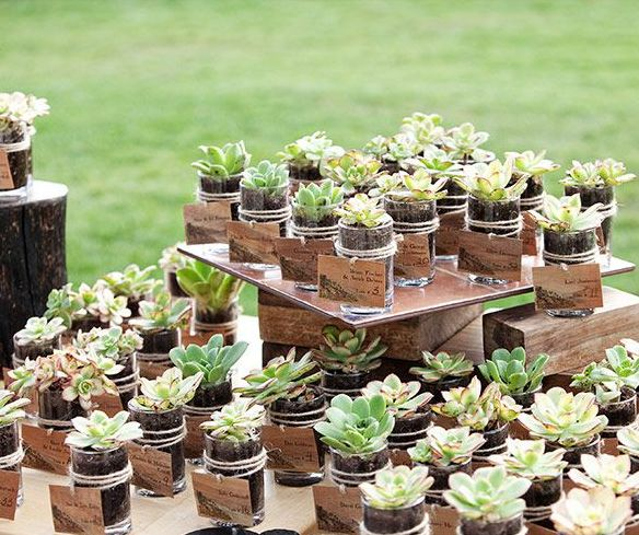 Eco inspiration. We love these little jars full of succulents.