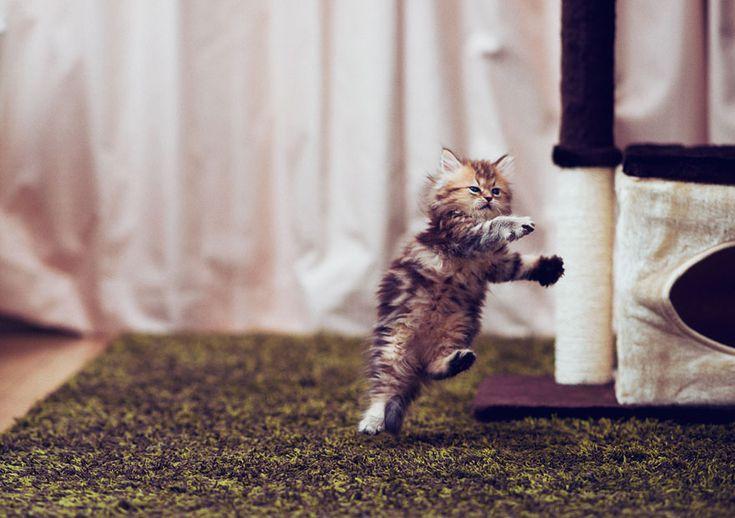 Probably the World's Cutest Kitten | Bored Panda