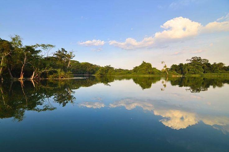 Replica perfecta en las aguas Del Río San Pedro, localizado en el parque nacional Laguna del Tigre ubicada en el municipio de San Andrés en Petén, Guatemala  Fotografia:  Rony Rodríguez