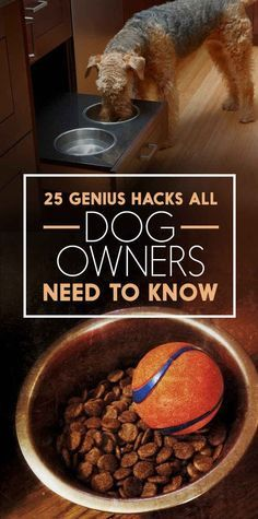 25 Genius Hacks That Make Having A Dog So Much Easier I see myself doing many of these for Betsy.