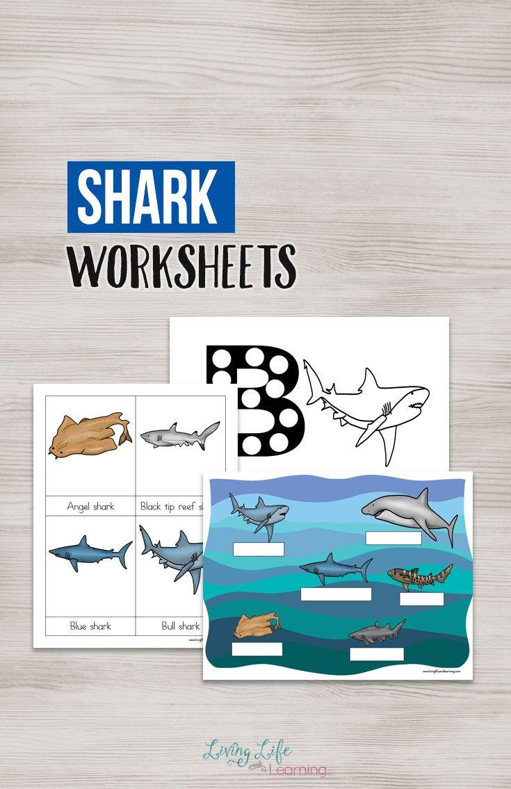 Sharks Worksheets For Kids Kids Learning Activities Shark Activities Kindergarten Science Activities [ 1135 x 735 Pixel ]