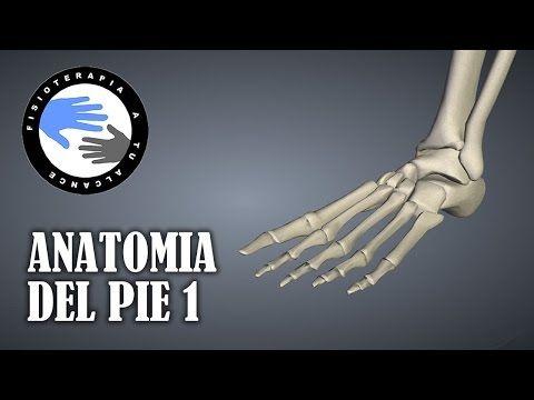 Anatomia del pie humano, huesos, funciones y fracturas mas frecuentes - YouTube