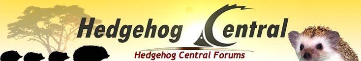 Housing Temperature : Heating/Cooling - Hedgehog Central – Hedgehog pet care & owner forum