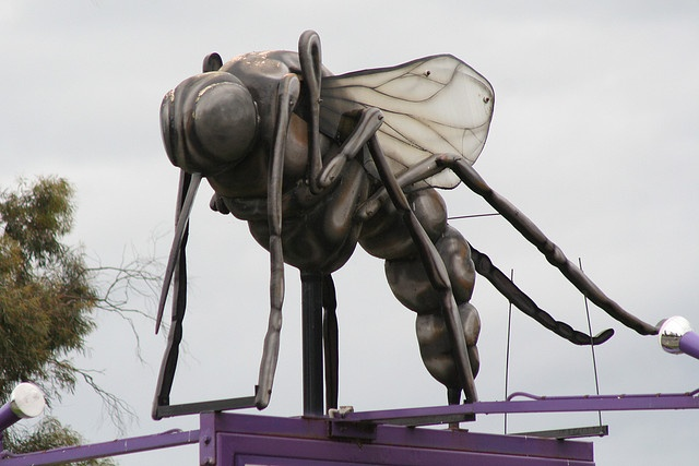 Big Mosquito / Ozzie the Mozzie - Hexham by the_ferret, via Flickr