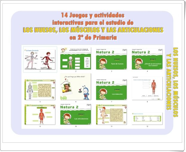 LOS HUESOS, LOS MÚSCULOS Y LAS ARTICULACIONES: 14 Juegos y actividades interactivas de 2º de Primaria