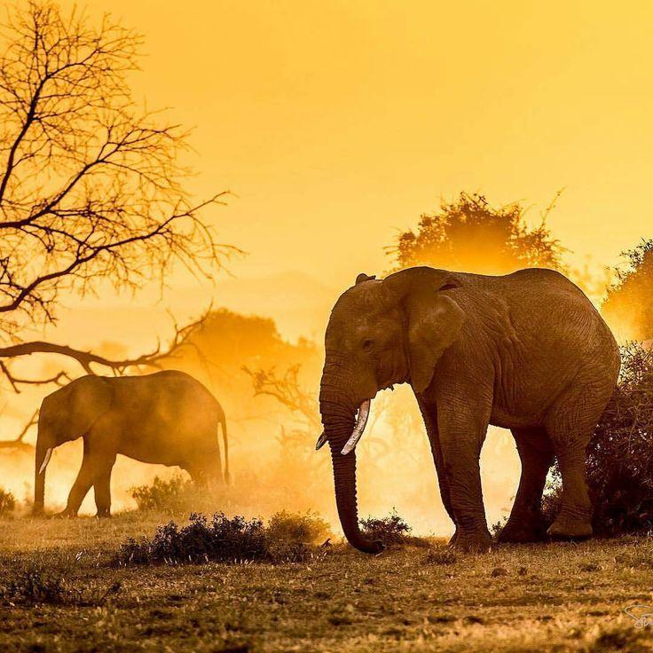 Elephantastic #Repost a la #wildographer @suhaderbent ・・・ #Wildography #WildographyandSafaris
