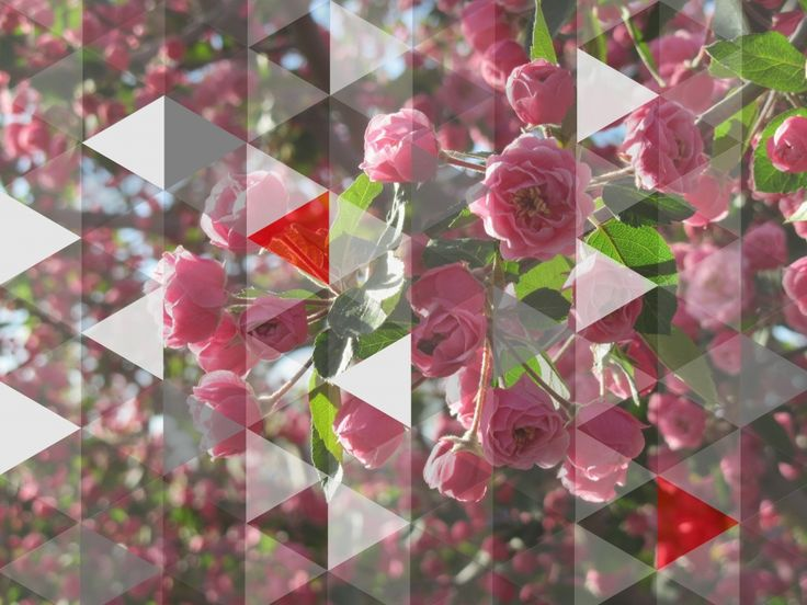 msced_362_triangleFlowers
