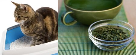 13 Natural Ways To Keep Your House Smelling Fresh- If you love your cat but don't love litter box odor, mix tea leaves with the litter. It will help to neutralize the smell.