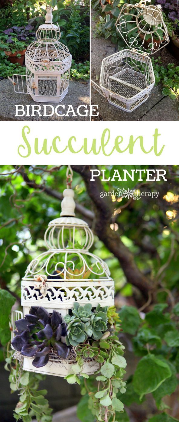 How to turn a decorative vintage-style birdcage into a hanging basket succulent planter for the garden! Birdcage Succulent Planter DIY Project Instructions and video. #gardening #gardentherapy #succulent #suuculove #birdcage #hangingbasket