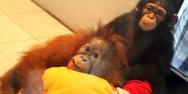 tingkah-lucu-bayi-hewan-di-nursery-room_663