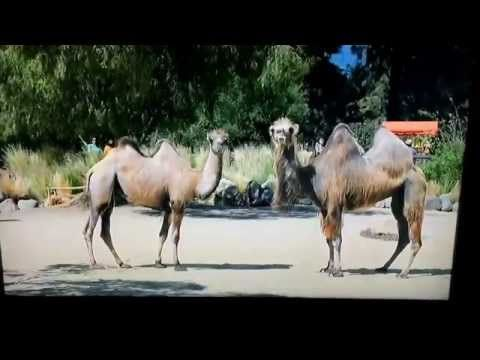 New hump day commercial.... - YouTube
