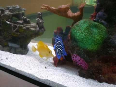 150 Gallon Fish Only Saltwater Aquarium