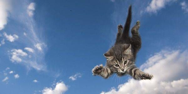 Come fanno i gatti a rimanere spesso illesi dopo una caduta dall'alto?