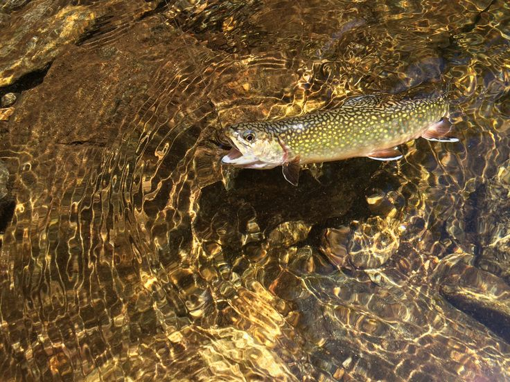 17 best images about woods and water brag board on for Best trout fishing in nc