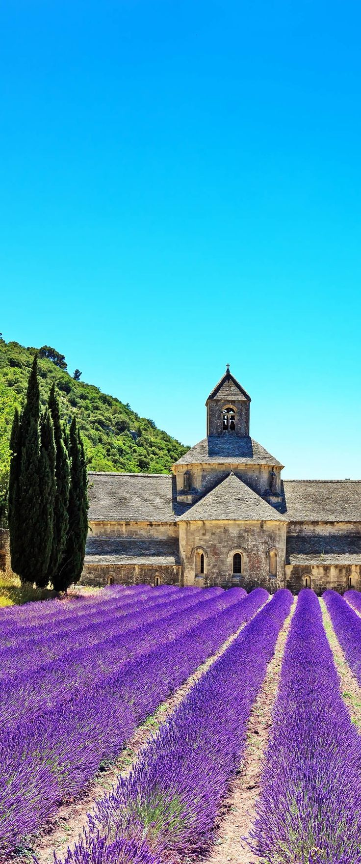 Abbey of Senanque and blooming rows lavender flowers. Gordes, Luberon, Vaucluse, Provence, France