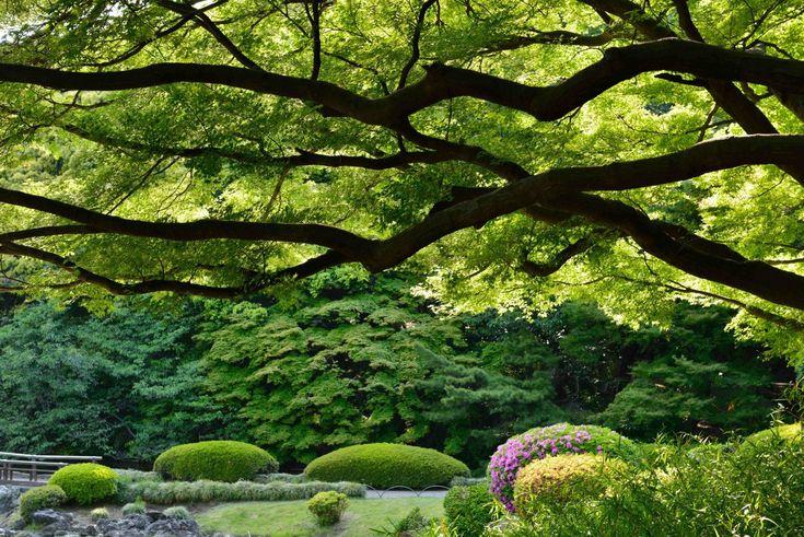 shinjuku gyoen national garden tokyo japan shinjuku gyoen tokyo japan shinjuku imperial park park tree