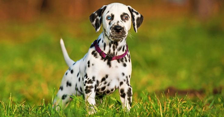 Images Of Different Breeds Of Dogs