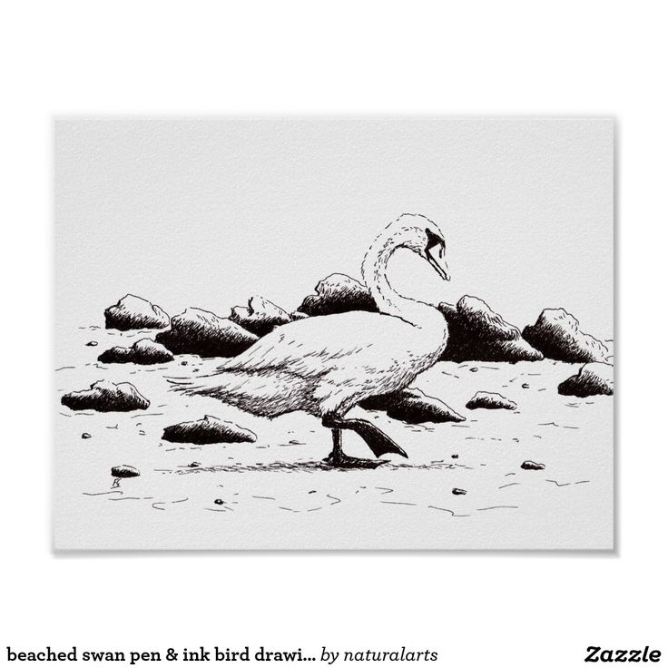 beached swan pen & ink bird drawing poster
