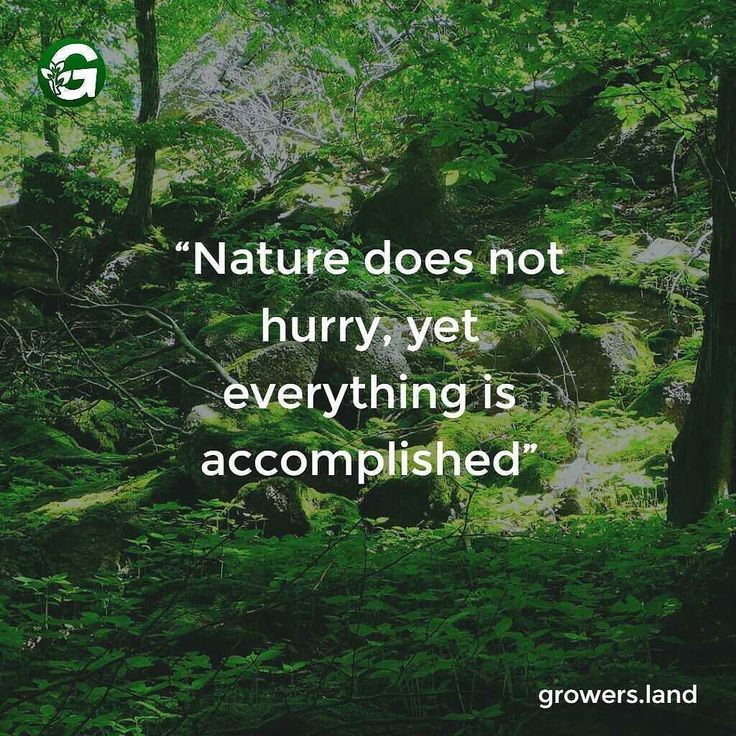 Nature does not hurry yet everything is accomplished #nature #accomplishment