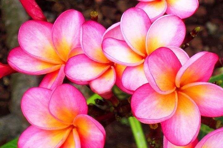tropik renkli çiçekler