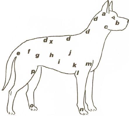 Comment masser son chien - Ostéopathie et acupression pour chien - Wamiz