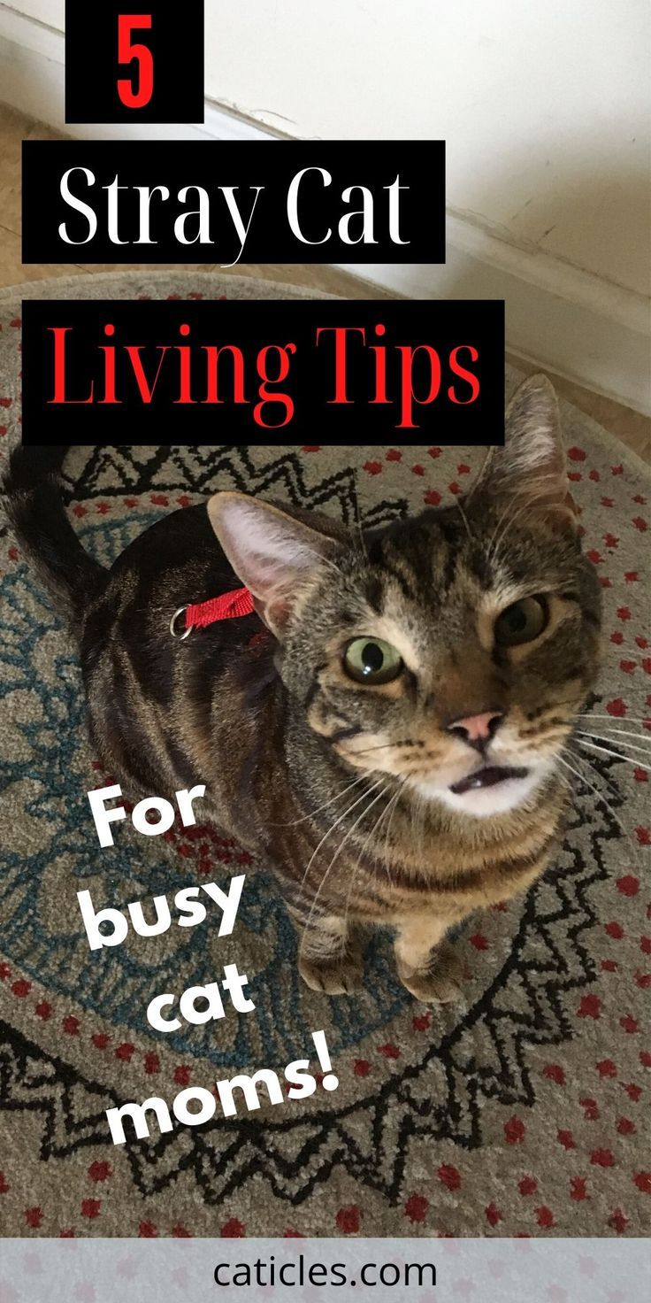 A Stray Cat Has Adopted Me 6 Things You Need To Do Stray Cat Cats Cat Care