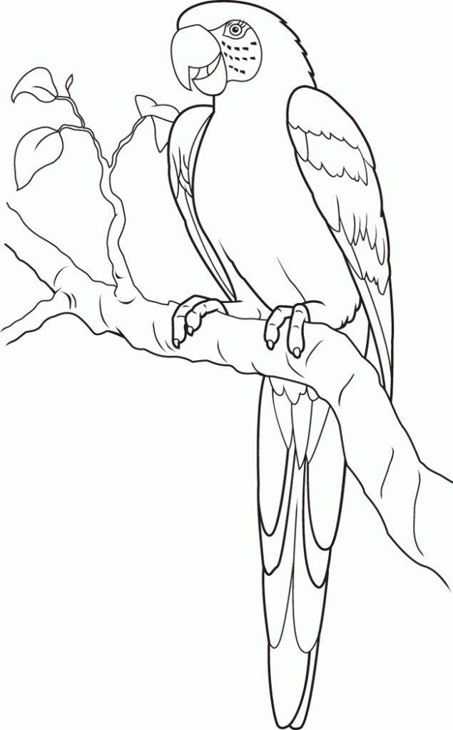 Pagina Para Colorear De Loros Para Ninos Para Ninos Colorfiles Poppages Kreative Papagei Zeichnung Ausmalbilder Papagei Malvorlagen