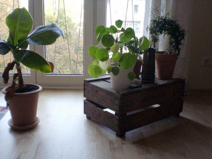 16102011_holzkiste_obst_pflanzen_raupenblau