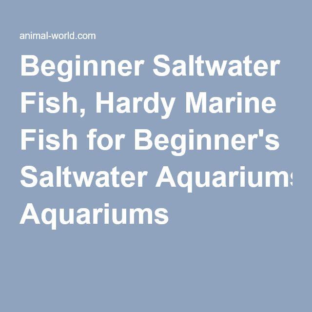 Beginner Saltwater Fish, Hardy Marine Fish for Beginner's Saltwater Aquariums