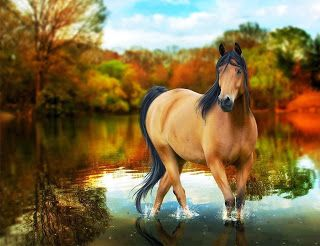 13 best hd wallpapers desktop horse free images on pinterest to hug and love on a horse i keep dreaming of riding horses again pain free and feeling like flying hoping this beauty will be my ride tonight voltagebd Choice Image