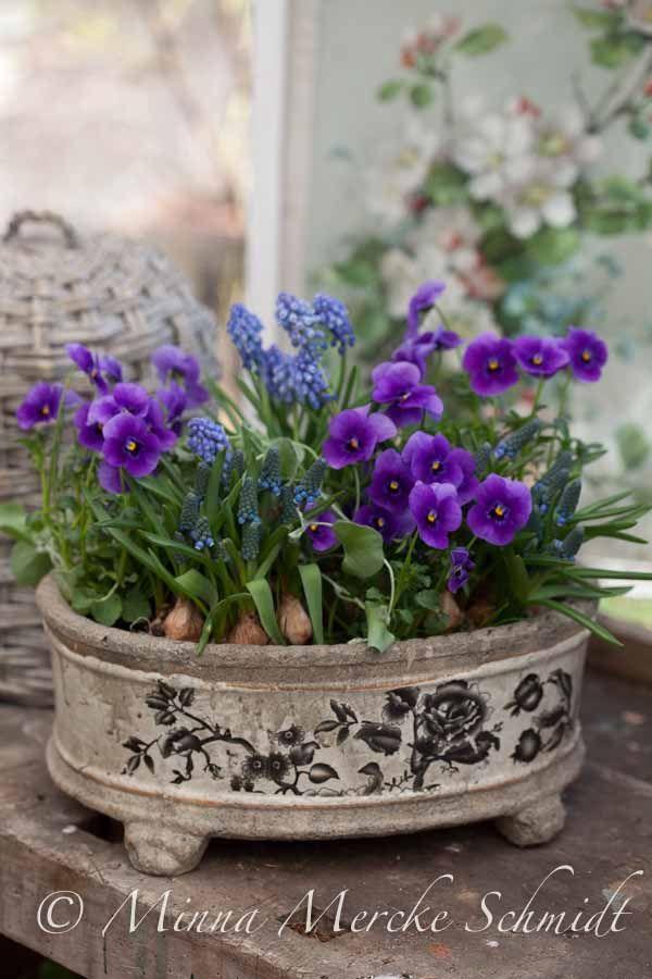 pensé vårblommor vårplantering minna mercke schmidt blomsterverkstad-4