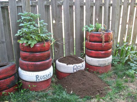 Growing potatoes in a tire tower ~