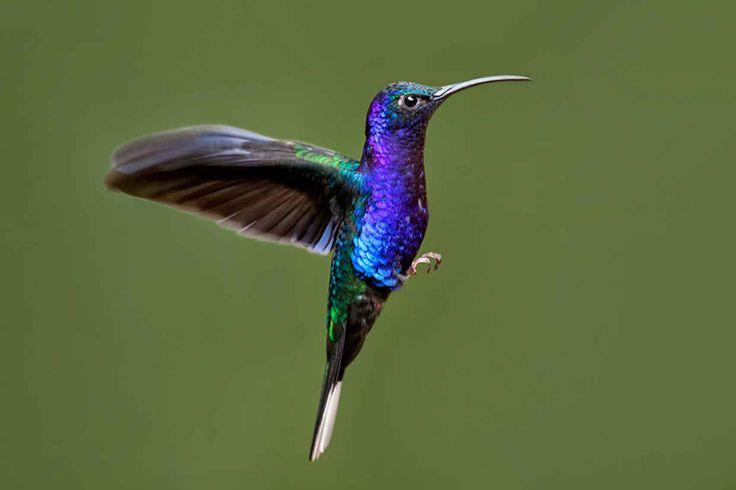 20 Beautiful Close-up Photographs of Hummingbirds - BlazePress