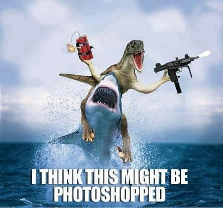 isn't this what Photoshop is for?: Funny Pics, Real Life, Jurassic Park, The Ocean, Hilarious Pictures, Funny Stuff, Funny Photo, Sharks Week, So Funny