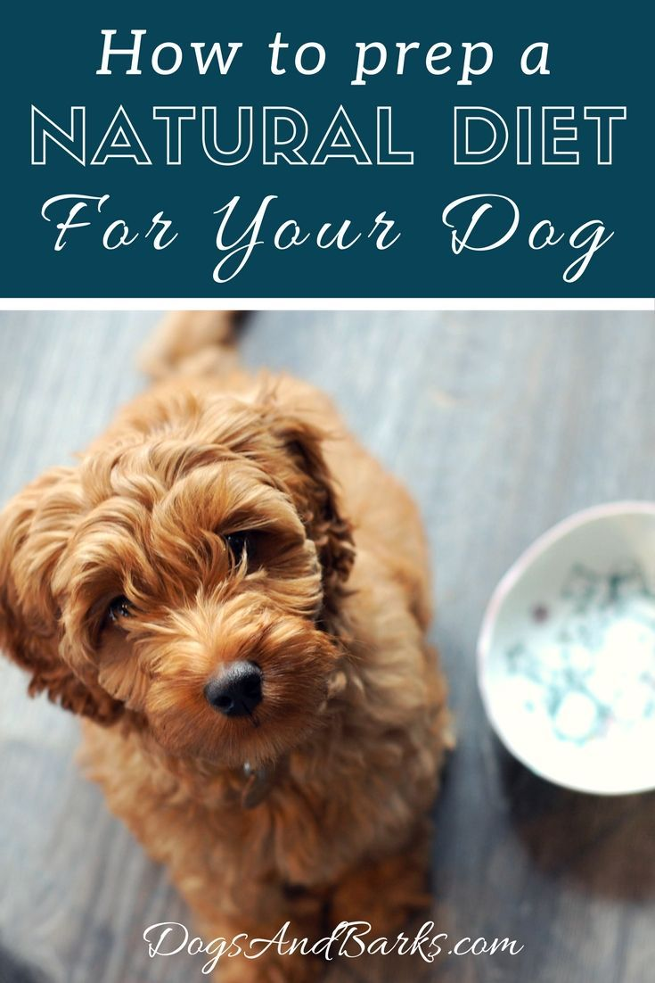 Let's face it, most pet owners just opt for store-bought dog food out of laziness.