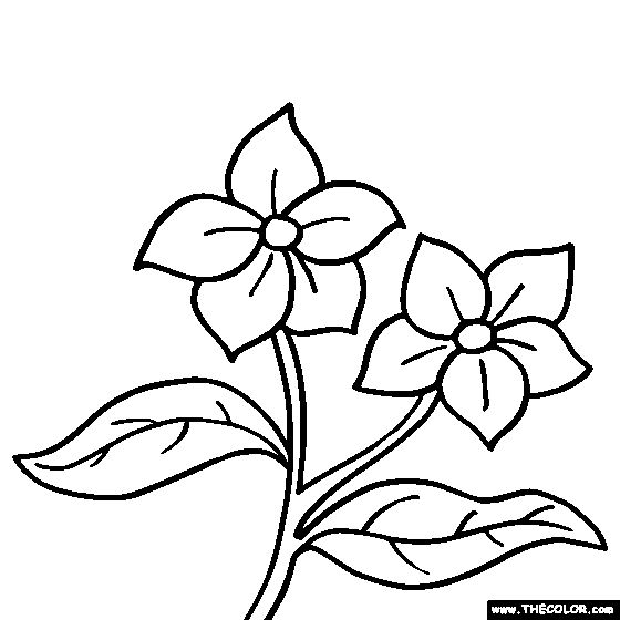 coloring pages of a flower - photo#27