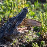 Esteros del Ibera Wetlands in Pictures: A Highlight of Argentina
