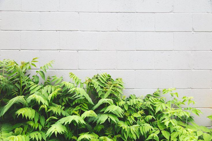 Leaves White Brick Background