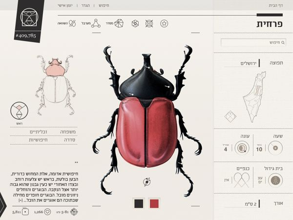 Insect Definer on Behance