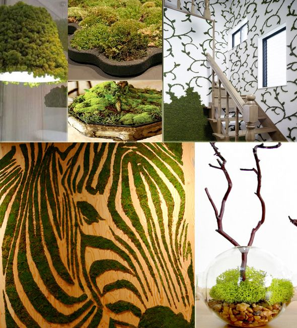 moss art and recipe to start your own