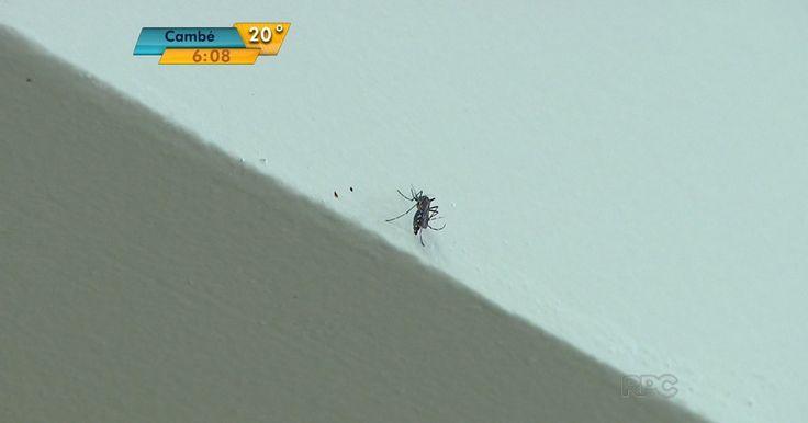 Após agente de endemias ter dengue, Aedes é flagrado em posto de saúde