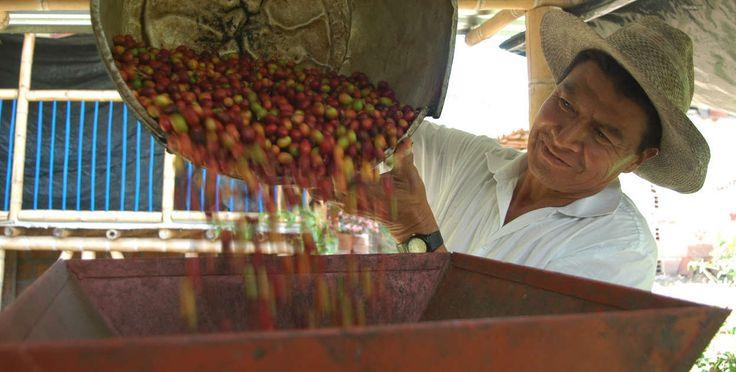 despulpadora de cafe colombia - Buscar con Google