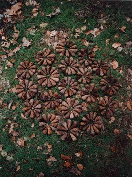 Cone Bursts. Hawarden Woods, Flintshire. 2006. Tim Pugh