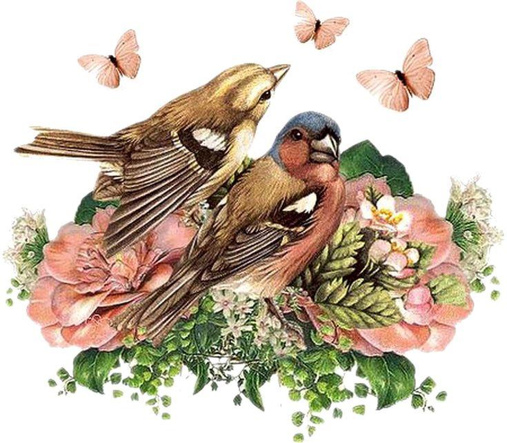 установки птицы на белом фоне картинки для декупажа интернет