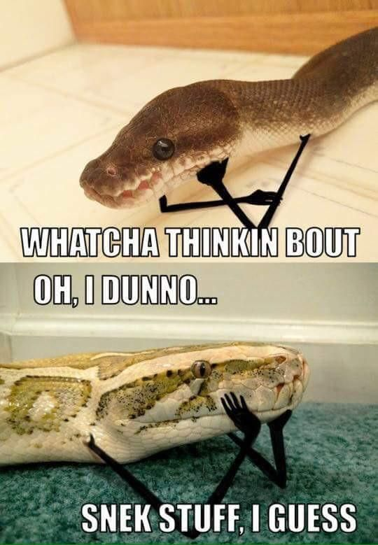 Snek stuff - #funny #lol #viralvids #funnypics #EarthPorn more at: http://www.smellifish.com