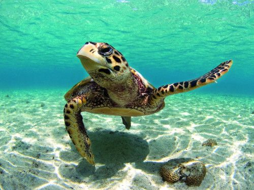 crystal clear water, Hawaii