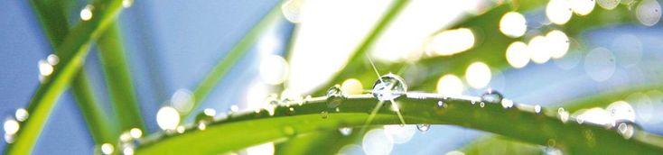 控制冬季湿度:在加拿大什么是适宜的湿度水平